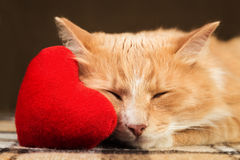 Red fluffy cat asleep hugging soft plush heart toy Stock Images
