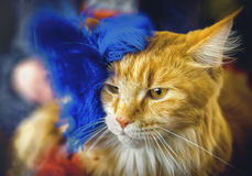 Red fluffy cat decorated with blue ostrich feathers. stock images