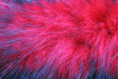 Red fluffy fur. Nred fluffy fur, texture for background Royalty Free Stock Photos