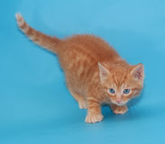 Red fluffy kitten backs on blue Royalty Free Stock Photos