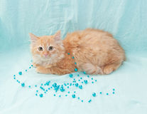 Red fluffy kitten playing with blue beads on pale blue backgroun Stock Photos