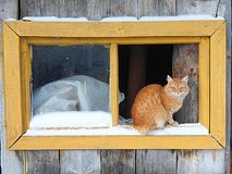 Ginger cat on the window. Red, fluffy, wool, ivory, baleen, striped, window, glass, sitting, barn, snow, frame stock image