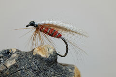 Red fly fishing lure Stock Images
