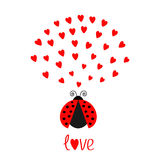Red flying lady bug insect with hearts. Cute cartoon character. Happy Valentines Day. Word Love Greeting card. White background. F Stock Photo