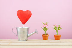 The red foiled chocolate heart stick with small silver watering can and mini fake flower in brown plant pot on wooden tray Royalty Free Stock Images