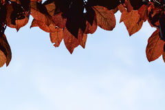 Red foliage Royalty Free Stock Photography