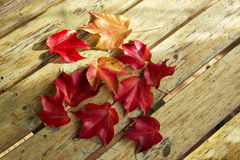Red foliage of maple leaves Stock Photo