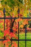 Red foliage on a metal fence royalty free stock photo