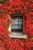 Red foliage on Window Stock Image
