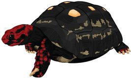 Red foot. Land turtle - Illustration Stock Photos