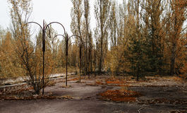 Red forest at Chernobyl city, Ukraine. Abadoned town.  Royalty Free Stock Photography