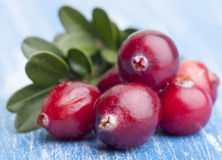 Red forest cranberries Royalty Free Stock Photography
