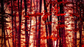 Red forest detail Stock Photo