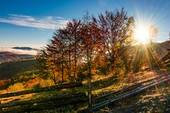 Red forest on hillside behind the fence at sunrise. Gorgeous mountainous countryside landscape in autumn Royalty Free Stock Images