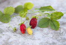 Red forest strawberries Stock Images