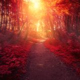 Red forest trees and sun light stock photo