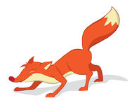 Red fox. Fan red fox. Isolated on white background Royalty Free Stock Photo