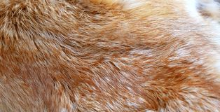 Red fox. Fur background texture Stock Photography