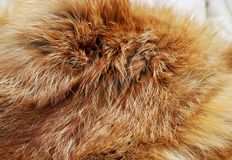Red fox. Fur background texture Royalty Free Stock Image