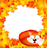 Red fox in autumn Stock Photography