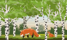 Red fox in a birch grove. Wild animals of the forest. royalty free illustration