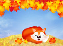 Red fox cartoon Royalty Free Stock Image