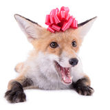 Red fox Christmas Royalty Free Stock Photos
