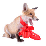 Red fox Christmas Royalty Free Stock Photography