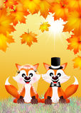 Red fox couple Royalty Free Stock Photos