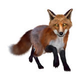 Red Fox. 3D digital render of a red fox  on white background Stock Photo