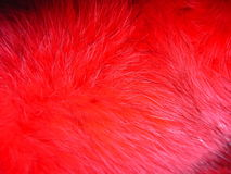 Red fox fur. Natural coloured fur of fox Stock Photography