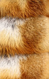 Red fox fur. Background texture Royalty Free Stock Photos