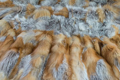 Red fox fur Stock Image