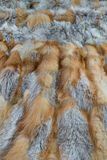 Red fox fur Stock Images