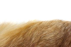 Red fox fur background texture Royalty Free Stock Image