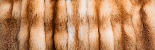 Red fox fur. The fur is more red than a fox Stock Photography