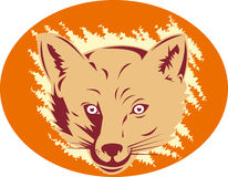 Red fox head mascot Royalty Free Stock Image
