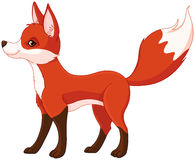 Red fox. Illustration of very cute red fox Stock Photography