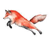 Red Fox. Isolated on a white background. Watercolor illustration. Red Fox. Forest predator. Isolated on a white background. Watercolor illustration Stock Photo