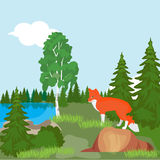 Red Fox in the North woods, in a forest clearing near the pond. Doodle style vector cartoon illustration royalty free illustration