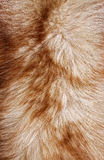 Red fox rough fur texture cloth Royalty Free Stock Images
