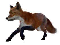 Red fox running - 3D render Stock Images