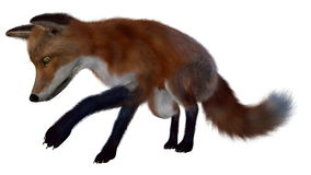 Red fox searching- 3D render Royalty Free Stock Images