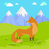 Red Fox Standing on the Meadow in the Mountains. Red fox vulpes standing on the meadow in the mountains. Cute wild animal with flattened skull, upright Stock Image