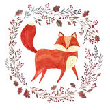 The red fox Royalty Free Stock Image