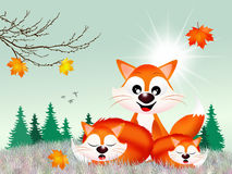 Red foxes Royalty Free Stock Image