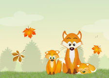 Red foxes in the forest Stock Images