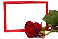Red frame and rose Royalty Free Stock Images