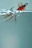 Red frances fly. Dragged through the water stock photography