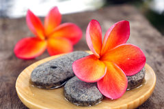 Red frangipani flower with stones Stock Photo